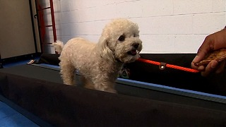 Doggie Gym - Video
