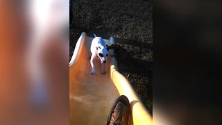 Cute Dogs Fail Climbing Up Slide - Video