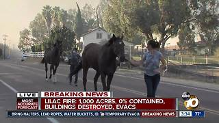 Dozens of horses rescued amid Lilac Fire - Video