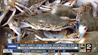 Decline in blue crab population leads to shorter crab season - Video