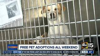 FREE pet adoptions this weekend in the Valley
