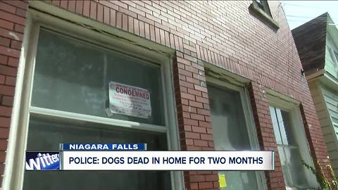 SPCA: dogs had been dead for more than a month