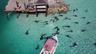 Drone footage shows sharks circling fishing boat in the Bahamas