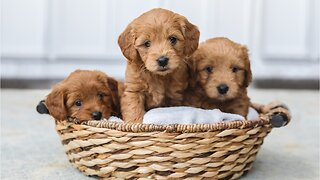 Five Things To Know Before Getting A New Puppy