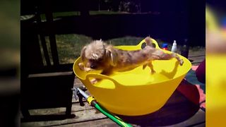 18 Animals Who Hate Baths - Video