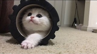 Playful Kitten Makes Adorable First Impression - Video