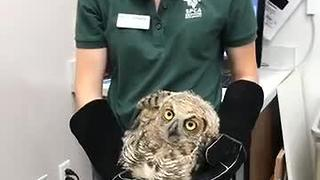 Owl rescued from soccer net - Video