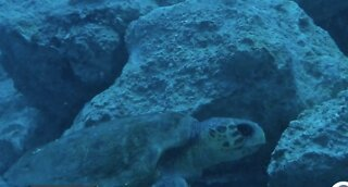 A living legacy: Building new reefs