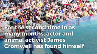 Oscar-Nominated Star Arrested For SeaWorld Protest - Video