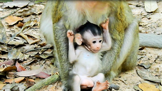 The Baby Monkey Cute