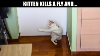 Kitten kills a fly and... - Video
