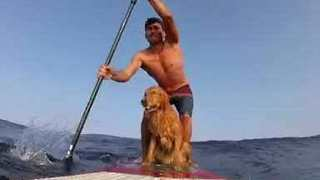Surf's Up: Dog and Owner Catch Some Waves