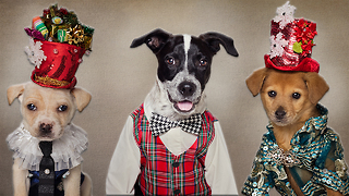 Rescue Dogs Get A Festive Makeover: CUTE AS FLUFF