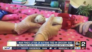 Kittens tied up in plastic bag, dumped in southeast Baltimore - Video