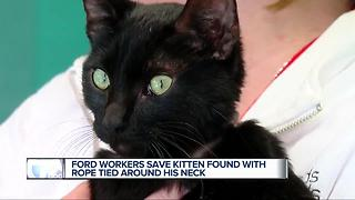 Ford workers save kitten found with rope tied around his neck - Video