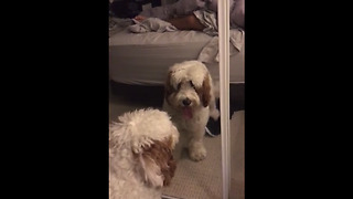 Dog furiously attempts to make contact with mirror reflection