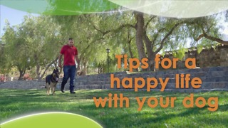 Tips for a happy life with your dog - Video