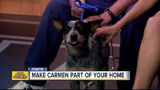 July 30 Rescues in Action: Make Carmen a new member of your family - Video