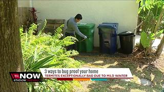 Mild winter making termites worse in Tampa Bay, here's how to protect your home - Video