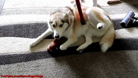 How to deal with all that husky fur
