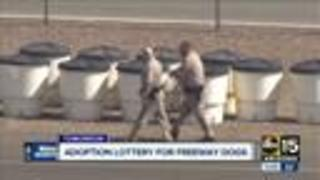 Adoption event being held for Phoenix freeway dogs - Video