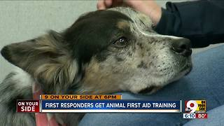 First responders learn animal first aid - Video