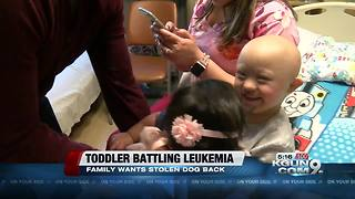 Toddler battling leukemia wants his dog back - Video