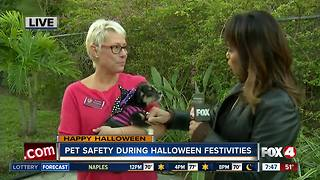 Pet safety tips during Halloween festivities - Video
