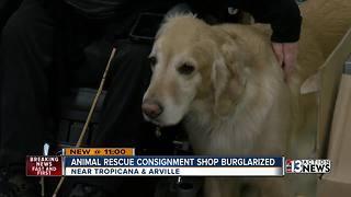Las Vegas animal rescue thrift shop burglarized - Video