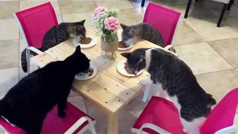 Family of Cats Have Dinner at the Table