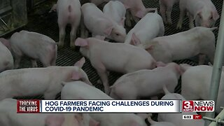 Hog farmers facing challenges during COVID-19 pandemic