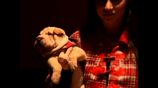 Argentine Doggy Designer - Video