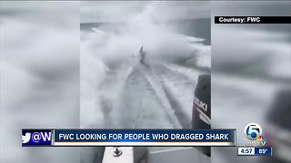 FWC looking for people who dragged shark - Video