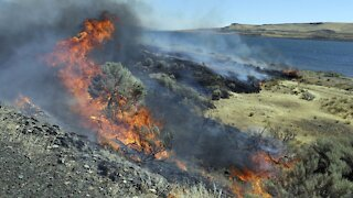 Plans Released to Help Reduce Fires in the West, Protect Wildlife