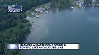 Harmful algae blooms found in Pontiac Lake and Sugden Lake - Video