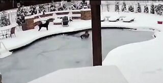 Woman Jumps In Frozen Pool To Save Dog!