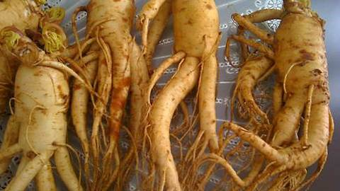 Is Ginseng Nutritious Or Harmful To Pregnant Women