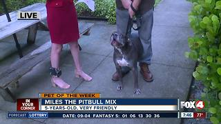 Pet of the Week: Miles