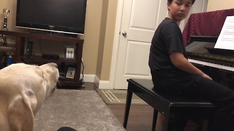 Injured dog starts singing again after recovery