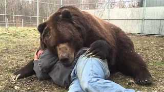 10 Foot Cuddly Bear Just Wants to Hug Man - Video
