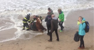 Horse Stuck in Sand Is Rescued as Tide Rises - Video