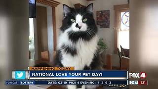 Fox 4 Morning News Celebrates National Pet Day - Video