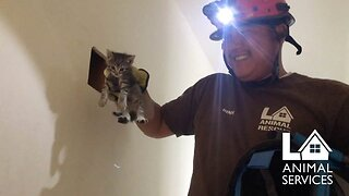Get Meowt! Rescuer Saves Kittens Trapped Between Two Walls
