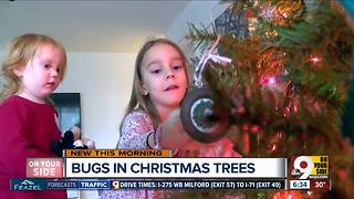 There might be something living in your Christmas tree - Video
