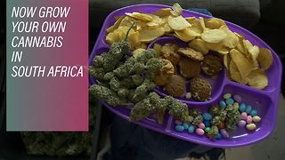 An African first: Weed legalized in South Africa - Video