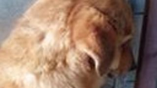 Withdrawn Rescue Dog Comes out of His Shell After Only a Week - Video