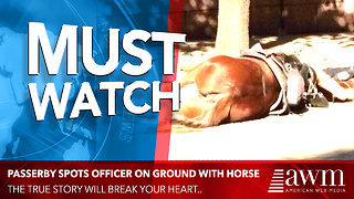 Passerby Sees Officer Laying With His Horse In The Street, Quickly Realizes Tragic Reason - Video