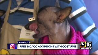 FREE pet adoptions for people wearing costumes!