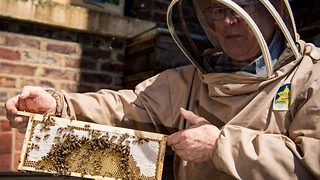 Bee-n around the block! Meet octogenarian who is UK's oldest beekeeper - Video