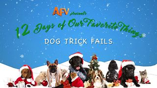 AFV's 12 Days of Christmas Dog Trick Fails - Video